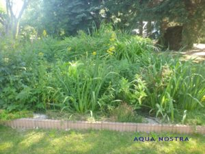 Sumpfbeetbepflanzung der PKA ELSA von aqua nostra