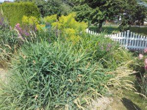 Mischbepflanzung - eine PKA mit Abwasserrückführung