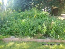 Sumpfbeetbepflanzung Aqua nostra